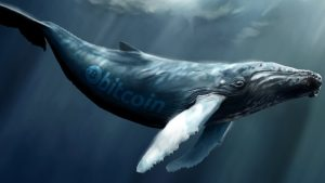 Bitcoin Whale Population Spikes to 1,882 - Highest Level in Three Years