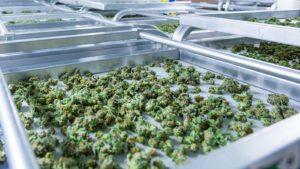 marijuana in storage