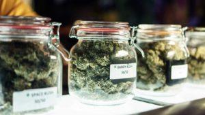 Glass jars of marijuana